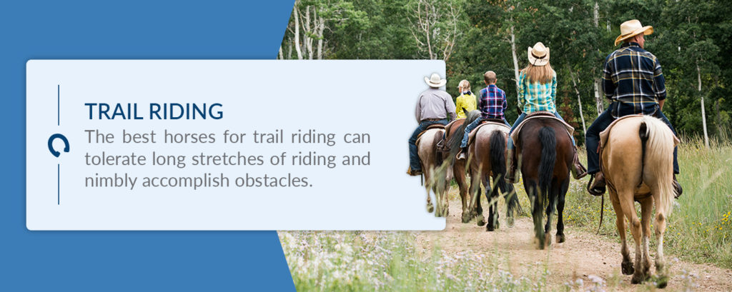 The best horses for trail riding can tolerate long stretches of riding and nimbly accomplish obstacles